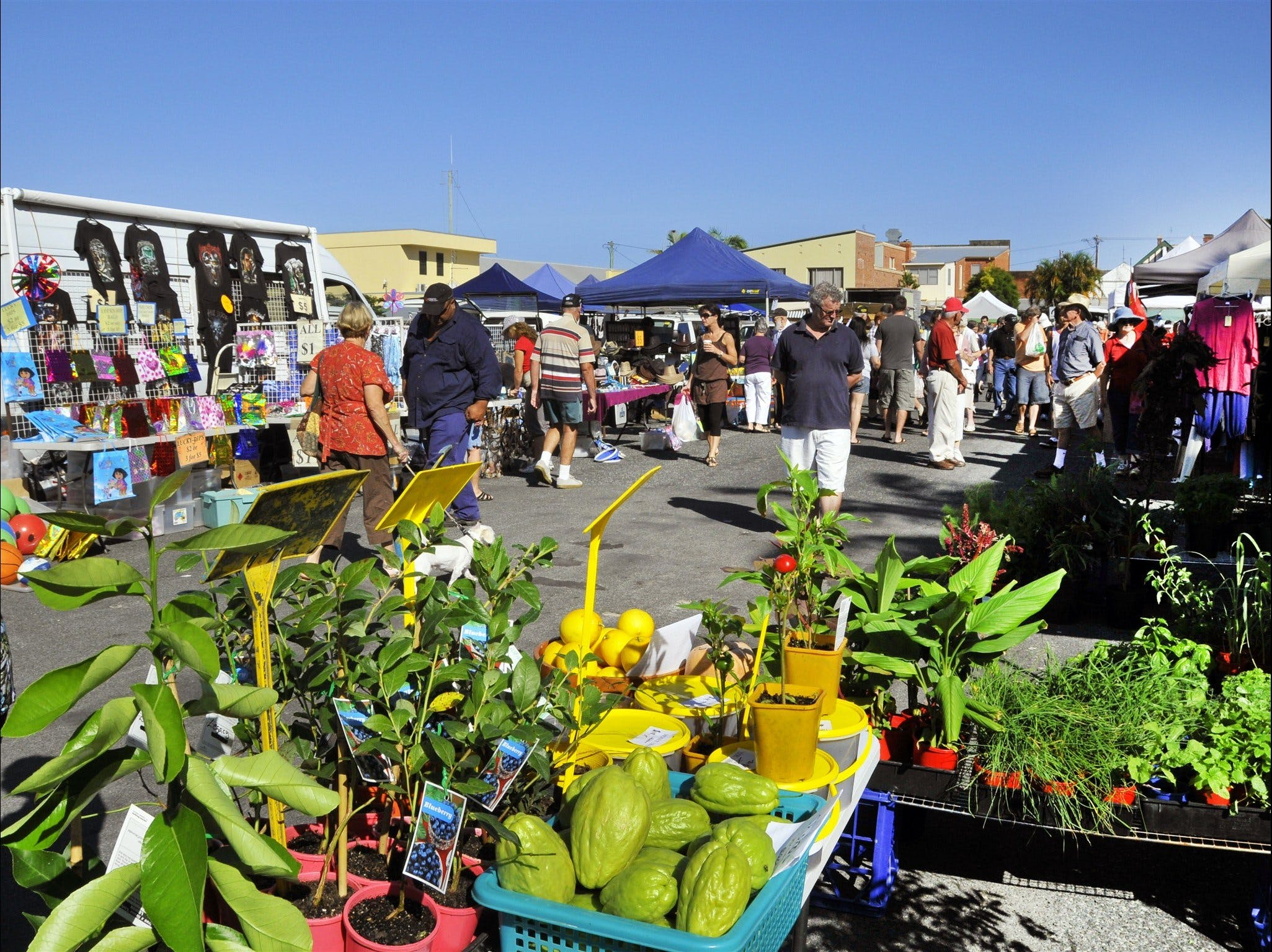 Maclean Community Monthly Markets - Newcastle Accommodation