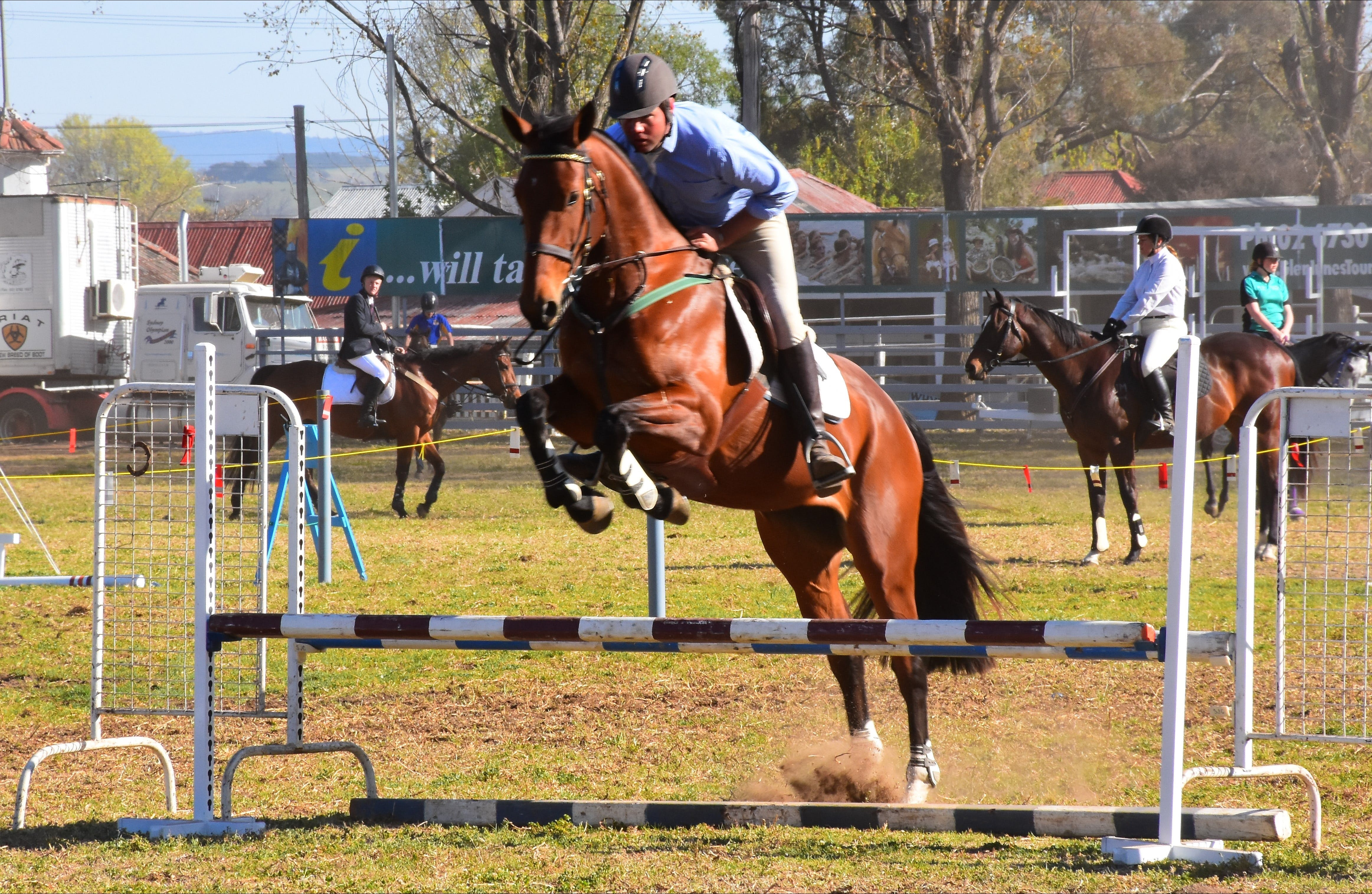 Glen Innes Pastoral and Agricultural Show - Newcastle Accommodation