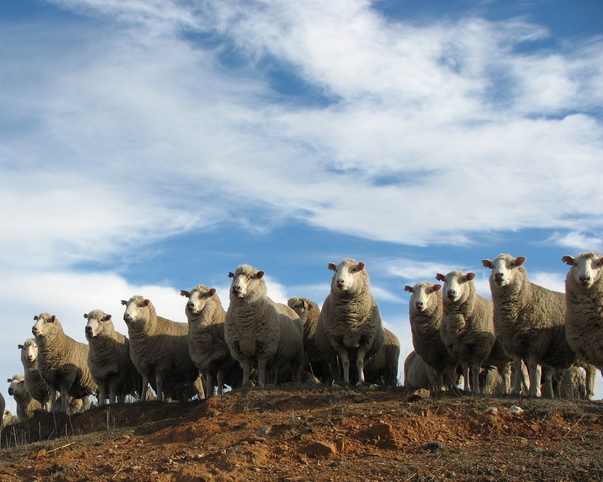 Annual Bredbo Sheep Dog Trials - Newcastle Accommodation